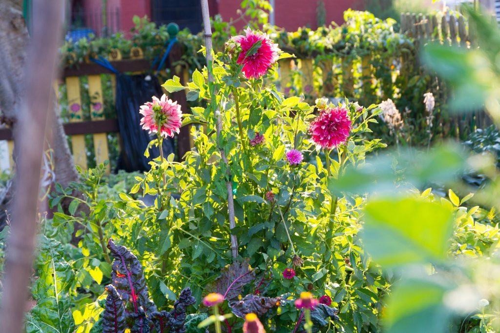 olde-allegheny-community-gardens-1
